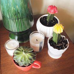 A vintage grouping by The Sweet Escape. #succulent #teacup #vintage #shelfie #milkglass