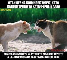 Greek Memes, Greek Quotes, Funny Videos, Greece, Jokes, Animals, Drop Cloths, Greece Country, Animales