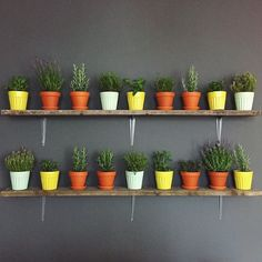 Blue Apron | Herb Wall | Plant Design by Leaf and June