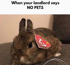 Funny humor memes hilarious jokes Ideas for 2019 Cute Animal Memes, Animal Jokes, Funny Animal Pictures, Cute Funny Animals, Cute Baby Animals, Funny Cute, Funny Images, Animals And Pets, Hilarious Pictures