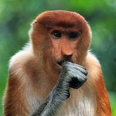 the singing monkey by Fajar Andriyanto, via 500px
