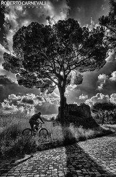 Past discovering |  Roberto Carnevali