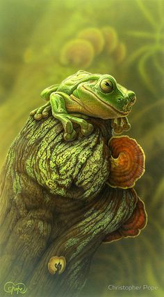 """""""Green Frog 2o1o"""" by Christopher Pope 