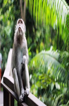 Ubud Monkey Forest is home to over 600 cheeky long-tailed macaque monkeys. How to get to Ubud Monkey Forest, Ubud Monkey Forest Price Monkey Forest, Ubud, Backpacking, Bali, Animals, Backpacker, Animales, Animaux, Animal