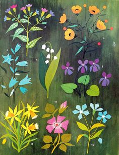 floral illustration -