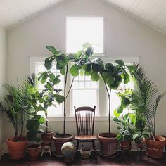 55 Indoor Plants Decor Ideas For Your Home These trendy Planters ideas would gain you amazing compliments. Check out our gallery for more ideas these are trendy this year. Room With Plants, House Plants Decor, Large Plants, Plant Decor, Indoor Garden, Indoor Plants, Olive Plant, Belle Plante, Decoration Plante