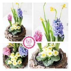 Meine Frühlingsblumen stehen jetzt schon in voller Blüte - der Hammer! <3