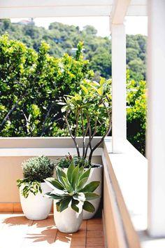 balcony-plants-long-sep-16
