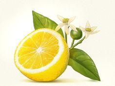 Lemon Painting, Lemon Watercolor, Watercolor Food, Lemon Pictures, Fruit Tattoo, Lemon Art, Wall Art Crafts, Anime City, Poster Background Design