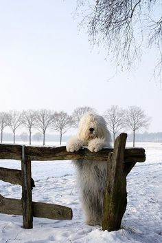 Fluffiness dog in winter