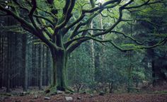 Notable trees - Nature and Escape in Forest Dark Forest