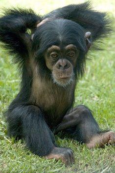 Love this cute little monkey.