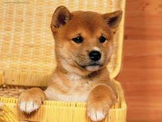 Super Extremely Adorable Baby Animals | Usare il pulsante destro del mouse sulla foto Cani persalvarla come ...