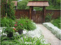 Imobiliare, Case la tara de vanzare, MRM Imobiliare vinde casa in Vistea, imaginea 1 din 8 Case, Plants, Plant, Planets