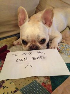 Dogshaming Involves Pet Owners Disgracing Their Precious Pups- soooo funny