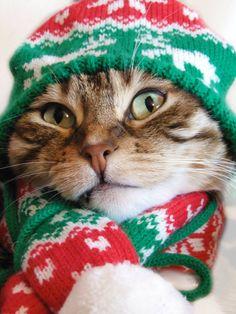 Christmas Woolies