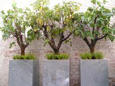 93 best tuin images backyard patio beautiful gardens gardening