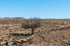 Lone tree in the Negev Desert by Jacky COSTI©- Photography on 500px