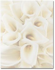 Wedding/Special Occasion - White Calla Lillies Letterhead ships to canada