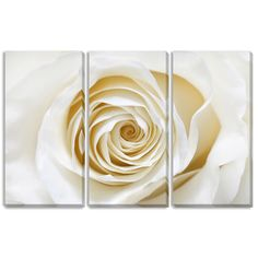 Spanning three gallery wrapped canvases that come ready to hang, a beautiful white rose's petals spiral out to fill the image. You'll love the delicate style of this triptych art that is ready to hang over a couch, sideboard or any bare wall.