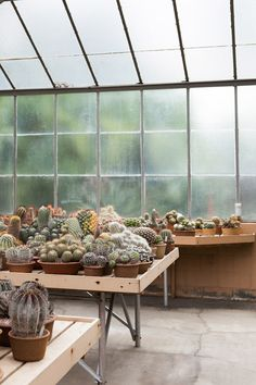 Magical cacti greenhouse, photographed by @Laure Lozano joliet.