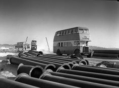 Buses transport workers to and from Australian Oil Refineries (AOR), Kurnell. Max Dupain photo, 1954.