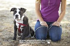 Why Preventative Puppy Training Is So Important. Dog training begins with puppy class -- and it can prevent unwanted dogs and pet homelessnes Puppy Training Schedule, Training Your Puppy, Dog Training Tips, Training Plan, Puppy Classes, Puppy House, Baby Pugs, Leash Training, Best Puppies