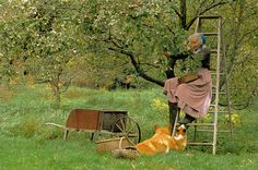 Tasha and Corgi's picking apples