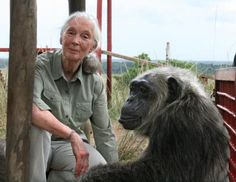 Jane Goodall with rescued chimpanzee la vielle at the jane goodall Institute's tchimpounga chimpanzee rehabilitation center in the republic of congo  explore/donate: the jane goodall institute~♛