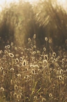 grass, growth, nature, field, plant, no people, beauty in nature, day, outdoors, tranquility, close-up, wheat, freshness, fragility
