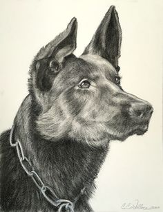 """""""Charley"""" charcoal on paper by Christie Chew-Wallace. www.ccwallace.squarespace.com 18"""" x 11"""""""