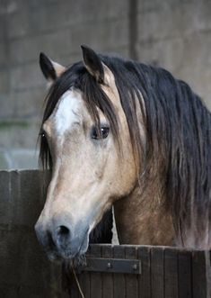 Trevallion Harley (Welsh) - Trevallion Harley (Welsh) Silent Self-confidence All The Pretty Horses, Beautiful Horses, Animals Beautiful, Welsh Pony, Horse Photos, Horse Pictures, Poney Welsh, Connemara Pony, All About Horses