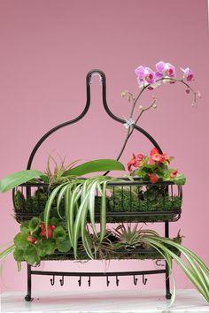 DIY Shower Plants | Houseplants | Plants, Shower plant