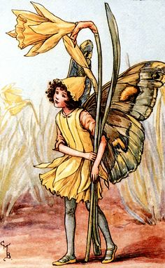 """""""The Song Of The Daffodil Fairy"""" by Cicely Mary Barker"""