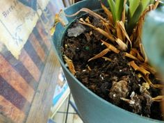 Holes In Potted Plants: Why Are Mice Digging Up Houseplants - If you've noticed your houseplants have tiny holes in the soil or you see signs of digging in your outdoor planters, it can drive you nuts trying to get to the root of the problem. Find out what to do about it in this article.