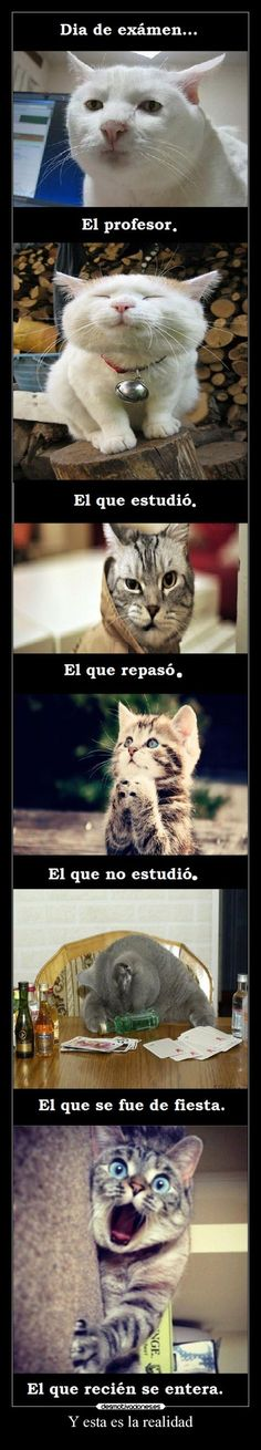 memes lol Woman Coats ll bean womans coats Animals And Pets, Funny Animals, Cute Animals, Funny Images, Funny Pictures, Gato Gif, Pokemon, Funny Spanish Memes, Grumpy Cat