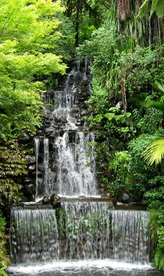 Waterfall Pukekura park, New Plymouth, New Zealand #newzealand