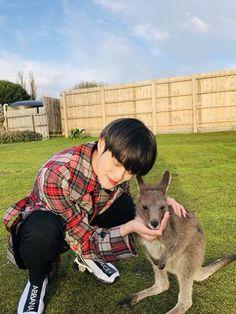 Daehwi so cute and Kangaroo 😍❤️ Youngjae, Im Youngmin Produce 101, Kdrama, Yoo Seonho, First Boyfriend, Guan Lin, David Lee, Boyfriend Pictures, Lai Guanlin
