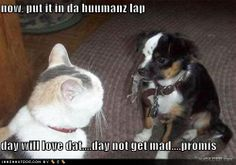 Funny Dogs with Captions | funny_dog_pictures_cat_tricks_dog_with_mouse_Funny_cats_and_dogs_pics ...