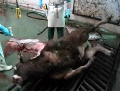 unconscionable cruelty, and legal, why vegan#