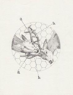 Pin Geometric Animals Vol 2a Ojpg on Pinterest