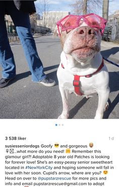 3/15/17 YEEEAAAHHHAAAA ❤️❤️❤️ IT'S ME AGAIN!!! I AM A REAL STARZ!!!! COME ON AND MEET ME - YOU'LL GET KISSES AND HUGS BUT NOT MY SUN GLASSES!! ❤️❤️LOVE PATCHES❤️❤️ /ij https://www.instagram.com/p/BRoJ9TKhuDK/