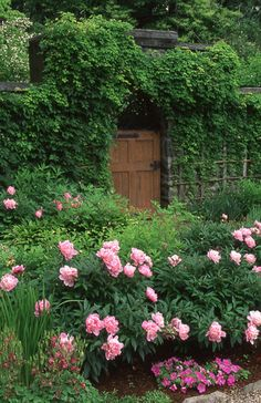 I simply adore hidden gardens. Gorgeous peonies lining the walkway.