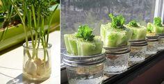 13 alimentos que crescem na água! Adorei a ideia