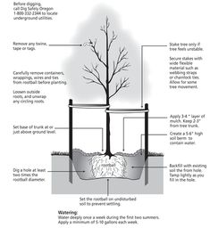 how to plant your tree