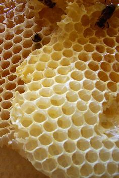 the bee and the hexagon---perfect planning and architecture....actually the bee should win the award for BEST URBAN PLANNER