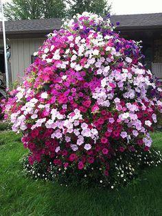 Petunia Trees | Wave Petunia Tree | Garden | Pinterest