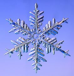 Real Snowflake Pictures | Real Snowflakes! - Christmas Photo (9447600) - Fanpop fanclubs