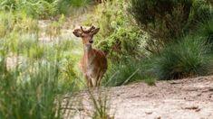 Tapada Nacional de Mafra, a natureza às portas de Lisboa Visit Lisboa, Visit Portugal, Nature Adventure, Natural Wonders, Giraffe, Animals, Floral, Sidewalk, Viajes
