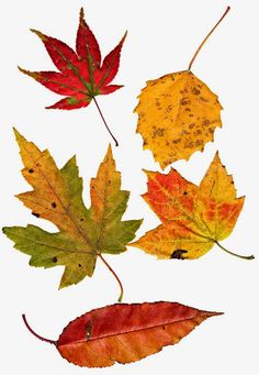 Kelly Luna: Fall Leaves - Free Images
